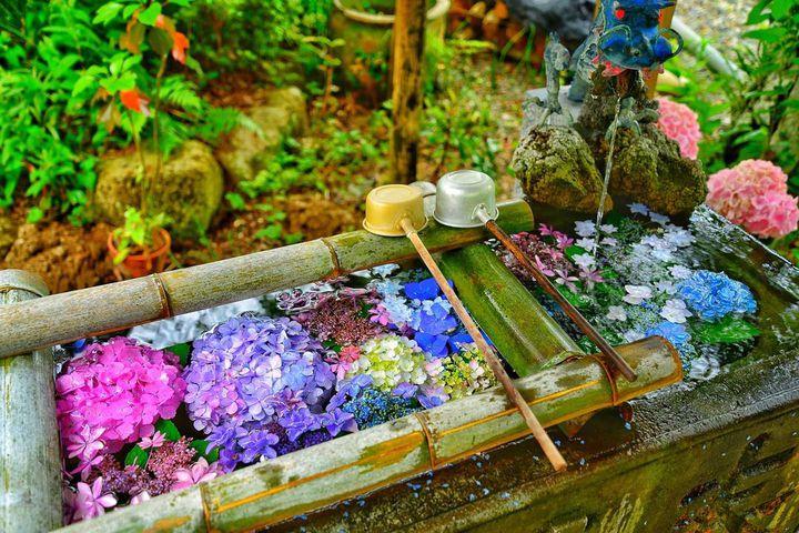 """水も滴る美しい梅雨の花。6月に行きたい関東の""""紫陽花スポット""""12選"""