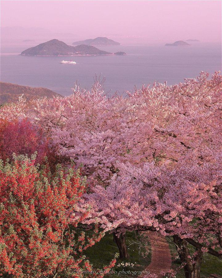 """迷っても立ち止まるな。日本全国の""""君に元気をくれる""""春の絶景10選"""