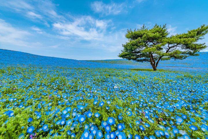 茨城県は絶景の宝庫!カメラを持って出かけたい茨城の絶景スポット7選