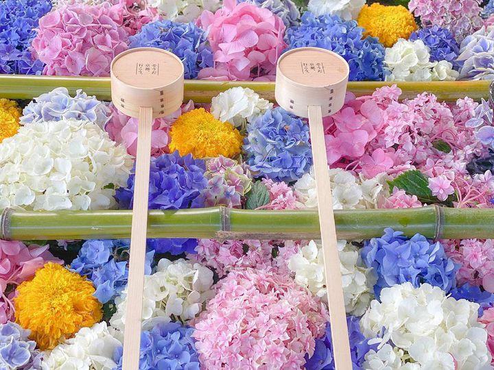雨だからこそ美しい紫陽花を見てほしい、関西でオススメのスポット7選