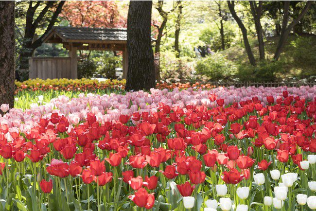 【終了】約60万本の花が横浜を飾る!「ガーデンネックレス横浜 2021」開催