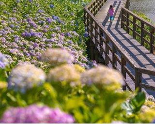 淡いグラデーションは今だけ。四国エリアの「紫陽花」を楽しむスポット8選