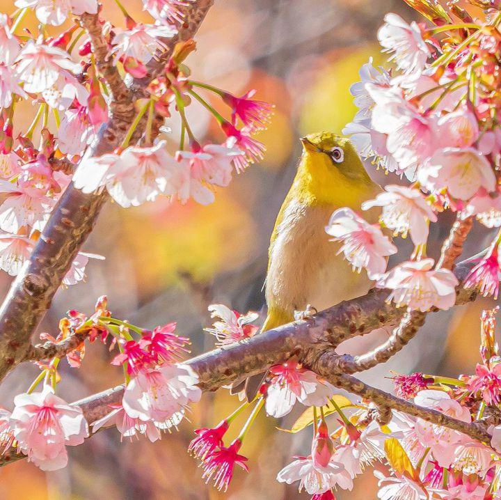 今年のお花見はどこへ行く?関東の桜の名所を開花時期とともにご紹介