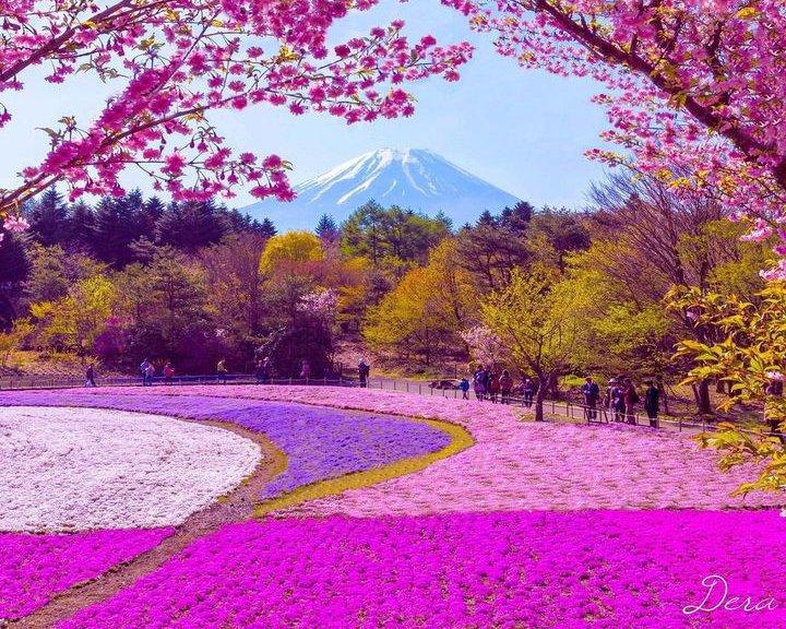 春の訪れを感じに行こ♡全国のフォトジェニックなお花畑LIST