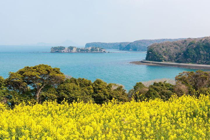 【終了】九州最大の菜の花畑を一目見に。大分県にて「菜の花フェスタ」開催!