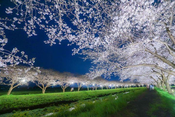 一生に一度は見たい景色。全国の絶対に見逃せないお花見スポット7選