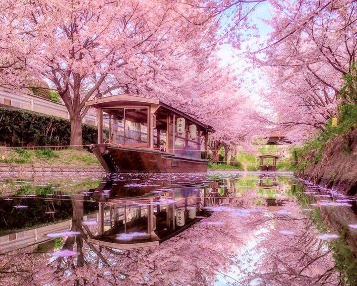 春旅には京都が最強でした。圧倒的に映える京都の観光スポットList