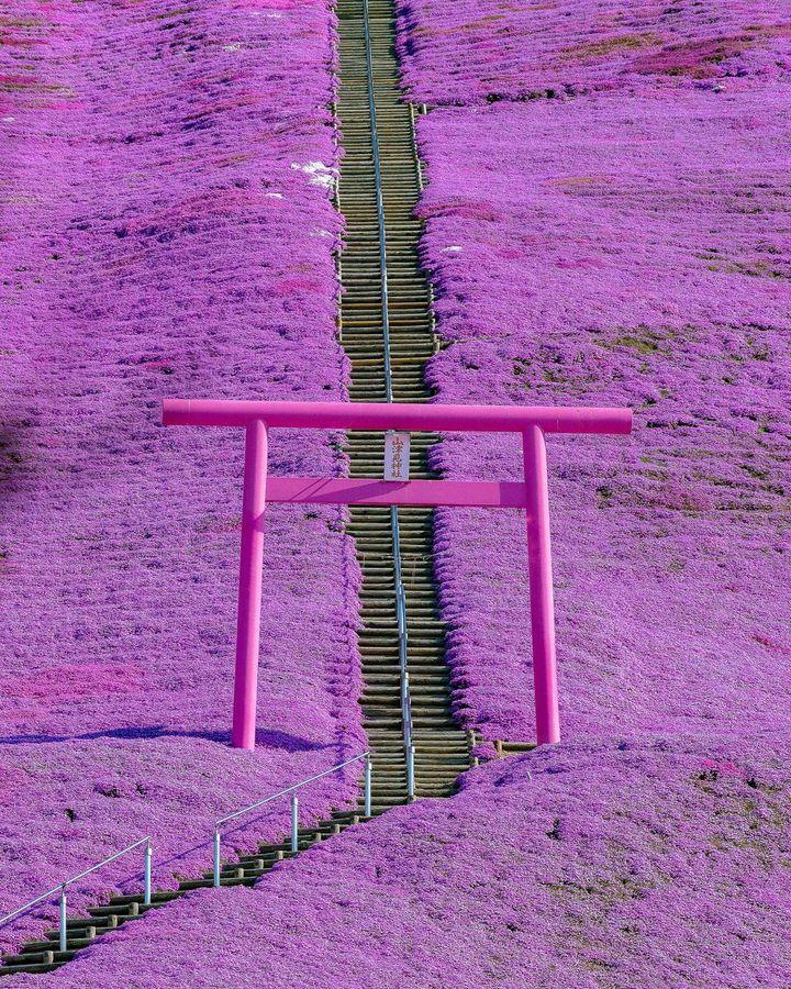 今注目すべき春の絶景はこれだ。RETRIP日本の3月いいね数ランキング