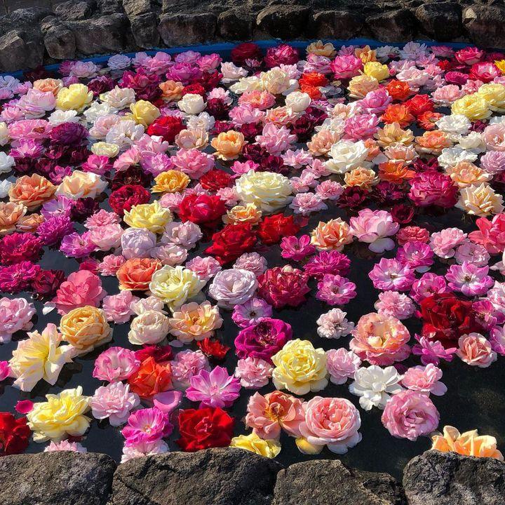 GWはお花畑でのんびりしたい!九州地方の華麗なる観光スポットここだ