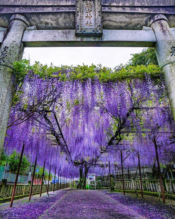 春の絶景を総復習!RETRIP日本の4月のいいね数ランキング
