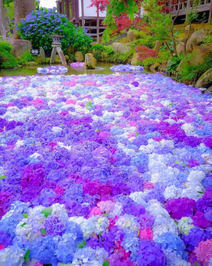 旅好きも惚れた!紫陽花が見れる茨城一泊二日プラン
