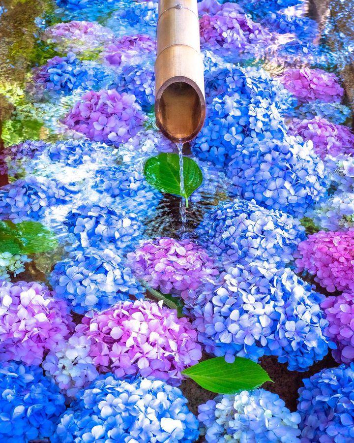 新しい寺社の楽しみ方!関東地方の「花手水」がみられるスポットまとめ