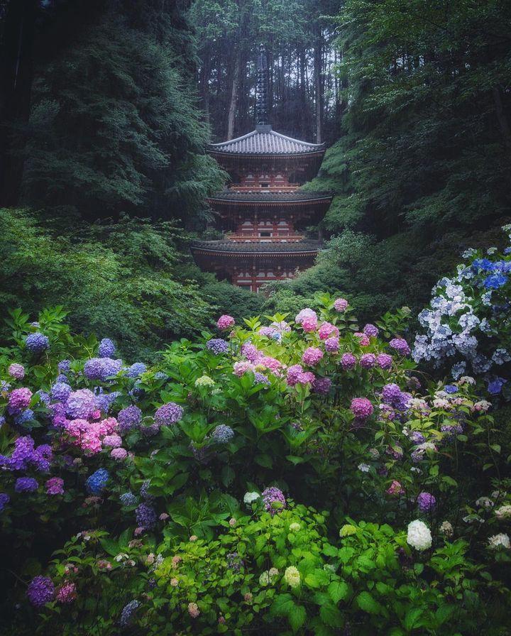 梅雨の季節にみたい絶景はこれ。RETRIP日本の今週のおすすめスポット7選
