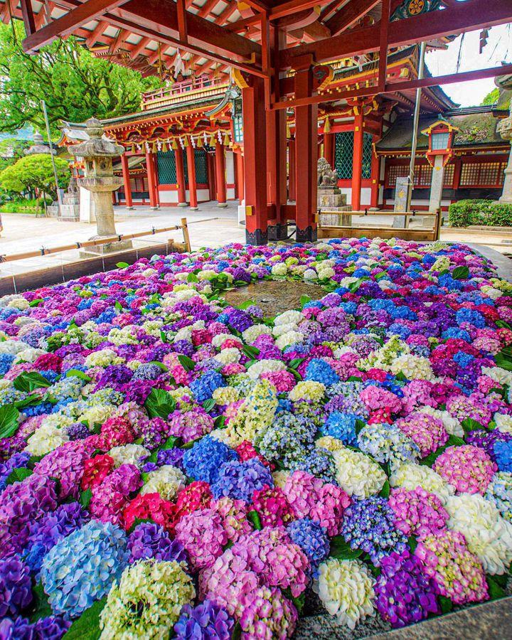 今が旬の紫陽花の絶景も!RETRIP日本の今週のおすすめスポット7選
