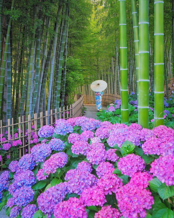 この紫陽花はどこでしょう?RETRIP日本の今週のおすすめスポット6選