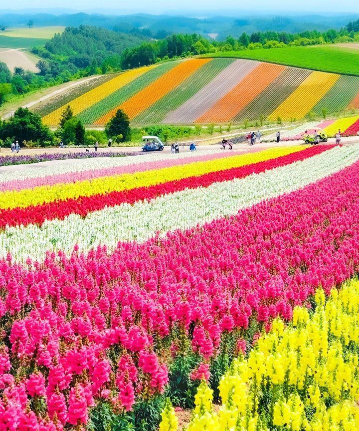 夏の北海道しか勝たん♥RETRIP北海道の今週のおすすめスポット