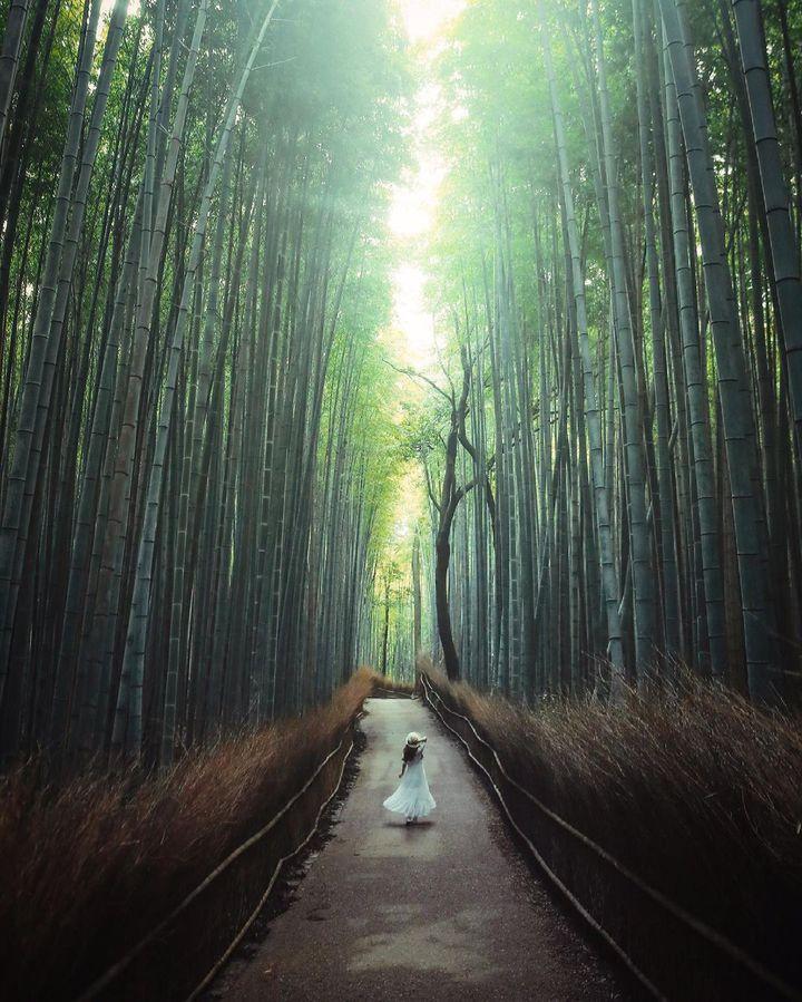 幸、癒、楽。今度こそ一人で行く、京都のアップデート旅プラン