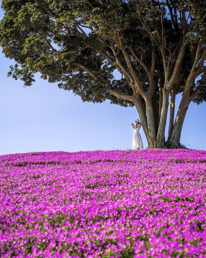日帰り夏の絶景スポット盛り沢山!東京近郊の今週したいこと8選