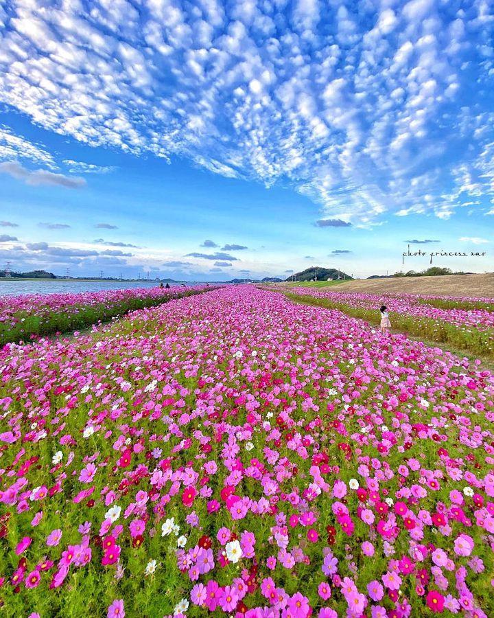 秋のお出かけにぴったり!RETRIP福岡の今週のおすすめスポット6選