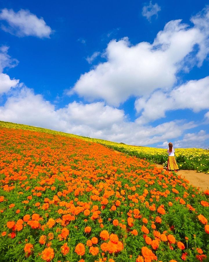 """出かけたくなる季節がやってきた。東京近郊の""""今週したいこと""""10選"""