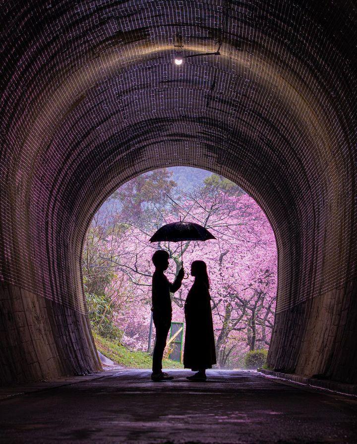 日本の桜は美しい。世界を魅了する桜の絶景ランキングBEST10