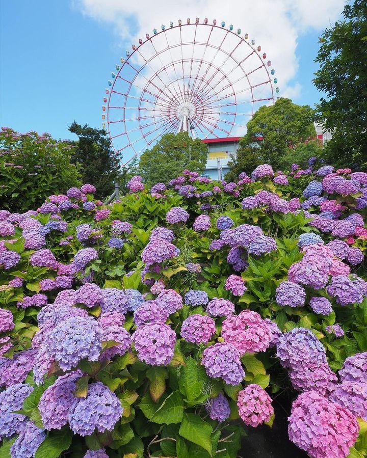"""幻想的な梅雨の景色!息を呑むほど美しい日本全国の""""紫陽花の名所""""15選"""