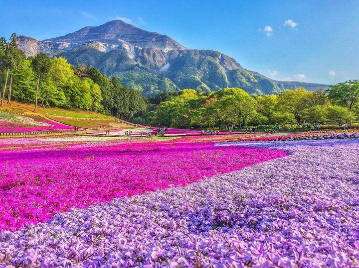 """季節限定のカラフルな世界!春に行きたい関東の人気""""お花畑""""12選"""