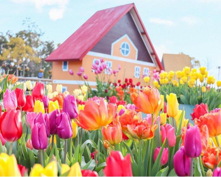 SNS映え間違いなし!この春見たい日本全国の「チューリップの絶景」10選
