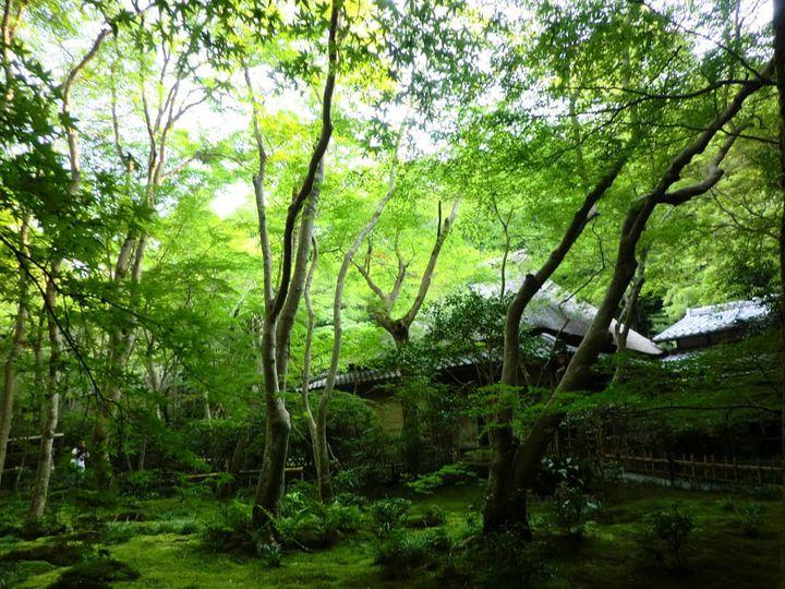 まさにフォトジェニック!緑の絶景に癒される、京都「夏」の名所12選