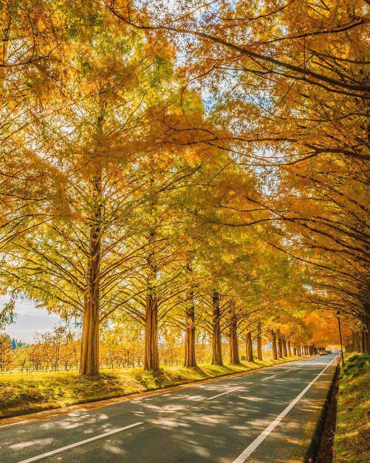 秋の旅行やお出かけに!日本国内の秋限定&今話題の絶景スポットまとめ