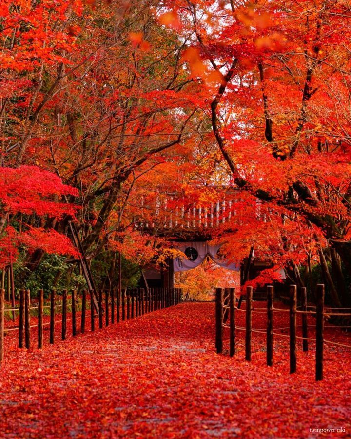 秋旅行は紅く染まる京都へ。思わず息を呑む絶景紅葉スポット10選【寺社編】