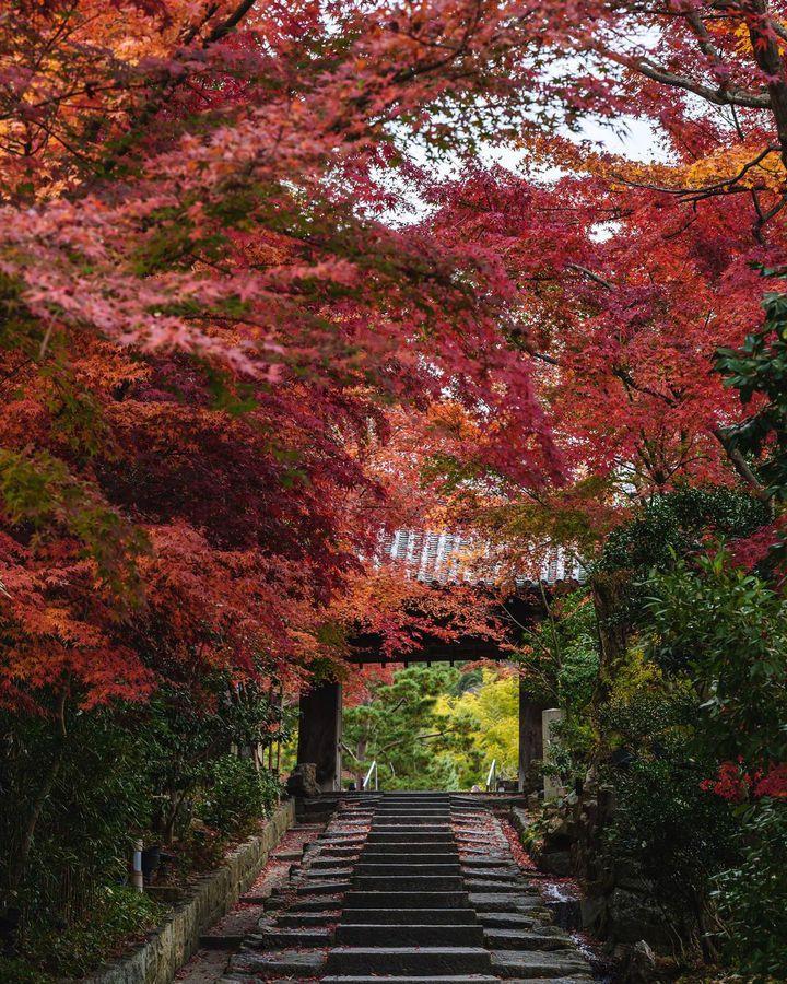秋旅を満喫しよう!11月1週目に行きたい国内旅行先&おすすめスポットまとめ